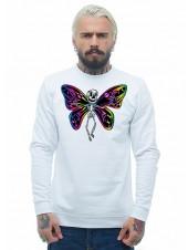 Скелет бабочки