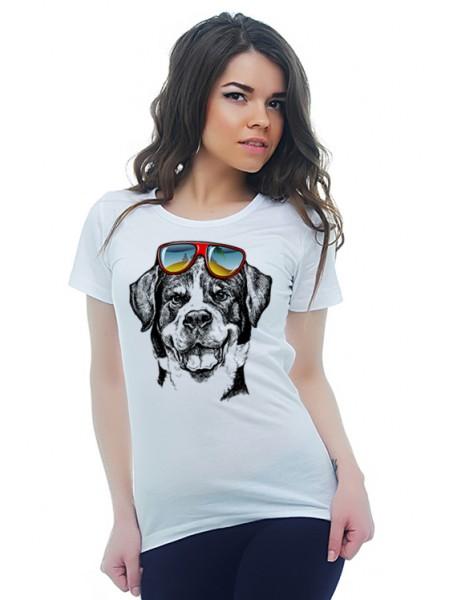 Собака и очки